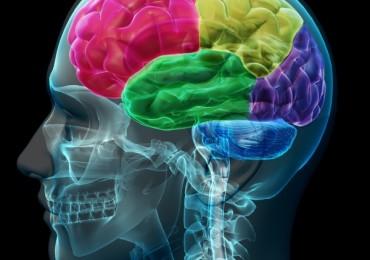 10 мифов о работе головного мозга: правда и вымысел